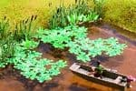 14114 Noch;  HO / OO Scales Laser Cut Water Lilies (approx 60 square cm)